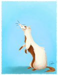 Ferret by Loyane
