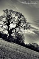 An Old English Oak. by ElementaryDearWatson