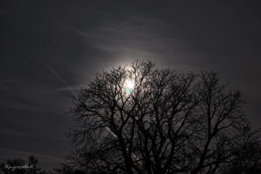 Moonlight shadow by King1976Bob