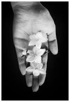Life in my hand by thenata