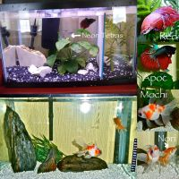 My Fish Setups by DarkMoon17