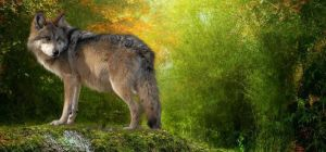Wolf of the Earth by Crystelly