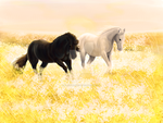 Horses by blackbear4110