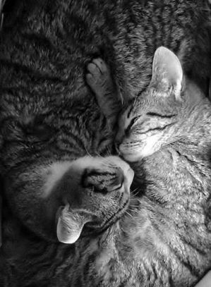 Ying and Yang Cat Love by desann12