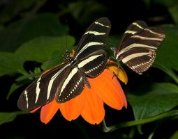 Bristol zoo butterflies  8 by AngiWallace