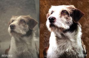 Painted Dog Before And After by Pixel2Portrait