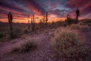 Saguaro Skies by dsnider