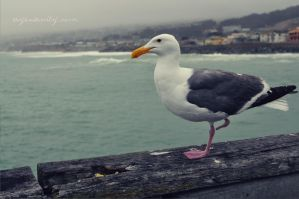 One legged Seagull by OftheCrucified