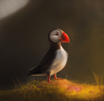 DAY 54. Photo Study - Puffin (35 Minutes) by Cryptid-Creations