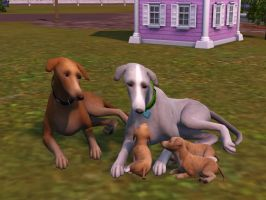 Greyhound family by SuperCatScourge