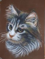 A cat portrait by Hemicarka