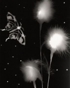Silver Butterfly in starlit sk by GoldenMermaid