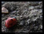 Ladybird by Francois088