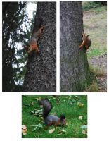 Squirrels by shapestock