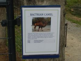 Bactrain Camel info by ToshirotheKnightWolf