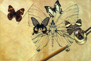 butterfly by overcover