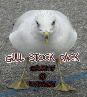 Gull stock pack by gurukitty