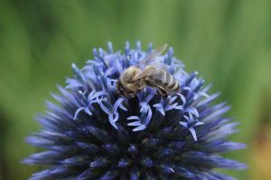 Little Bee come and see by Sabbelbina