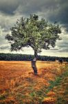 Tree Loneliness HDR by cenkakyildiz