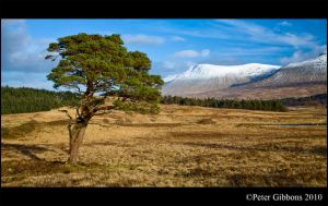 Scottish Moorland Tree 2 by Photo-Joker