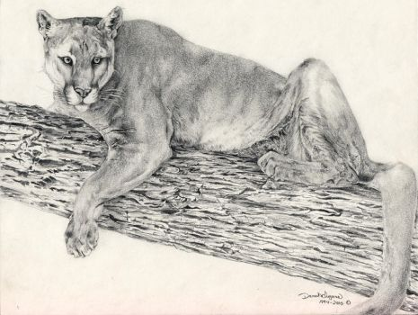 Mountain Lion, tree limb by 7kadja7