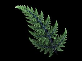 Apophysis Feathered Fern Frond by Gibson125