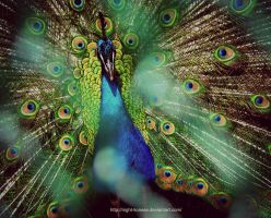 Colored Peacock by Night-Lioness