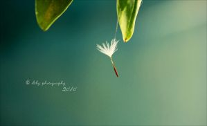 Dependent by ILTBY