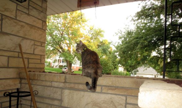 Cat on a Wall by hyenacub-stock