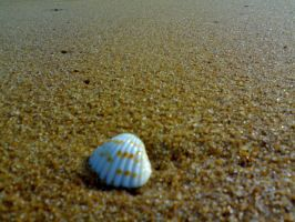 Beauty of a Lonely Shell by MickeyTheSaviour