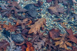 Underwater Leaves Background Stock by redwolf518stock