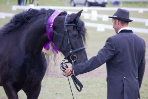 STOCK - Friesian Show 2012-155 by fillyrox