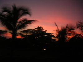 Palm Trees in the Sunset by houseki-stock
