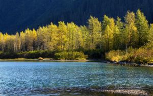 ALASKA GOLDEN AUTUMN by 1arcticfox