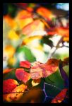 Autumn has come 2 by Dmitriyphoto