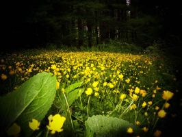 ButterCups by Hayley-Rhodes