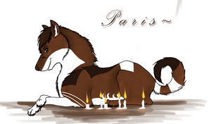 P a r i s ~ White--Swallow's Contest by Seraphiima-Stables