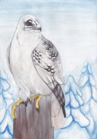 Gyrfalcon by inessiivi