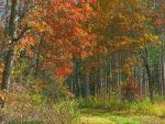 Fall Forest Trail 6 by VisionsSeen