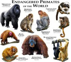 Endangered Primates of the World by rogerdhall