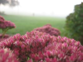 Flowers on a foggy day by FalconFlute