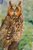 Watercolor and Ink #9 -  Long-Eared Owl by Oksana007