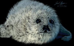Harp seal by dr-schreaber
