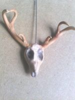 Deer Skull with Antlers by thedorris