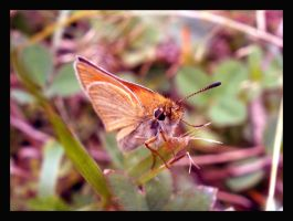 Little moth by What-is-worth