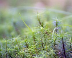 Forest floor by Enalla