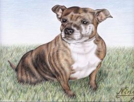 English Staffordshire Terrier by ArtsandDogs