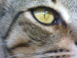 Cat Eye by Daisydog8