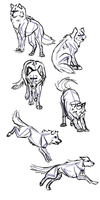 Wolf Poses by Voodoo-Wolf