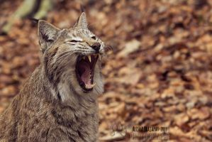 A big yawn. by Ravenith